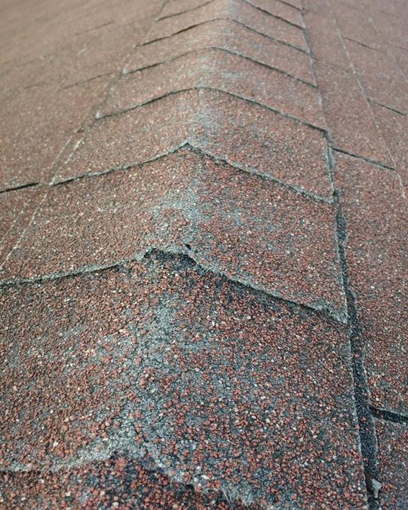 Shingle Roof Care