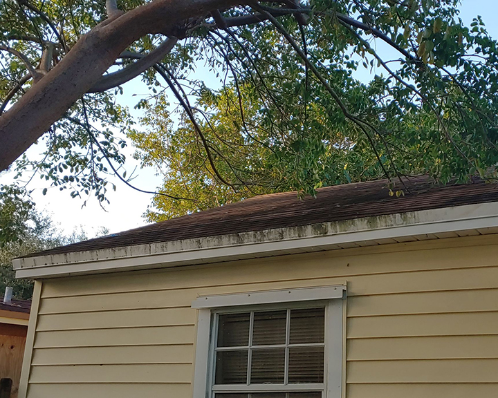 Tree branches lay over the roof